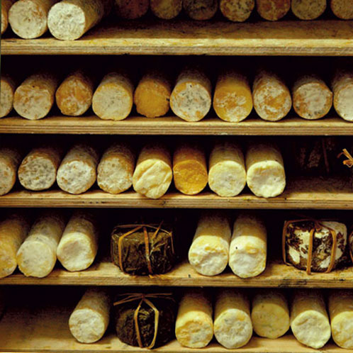 .גבינות מחלב עיזים אורגני של חוות חלב עם הרוח בגליל. צילום: טל גליק