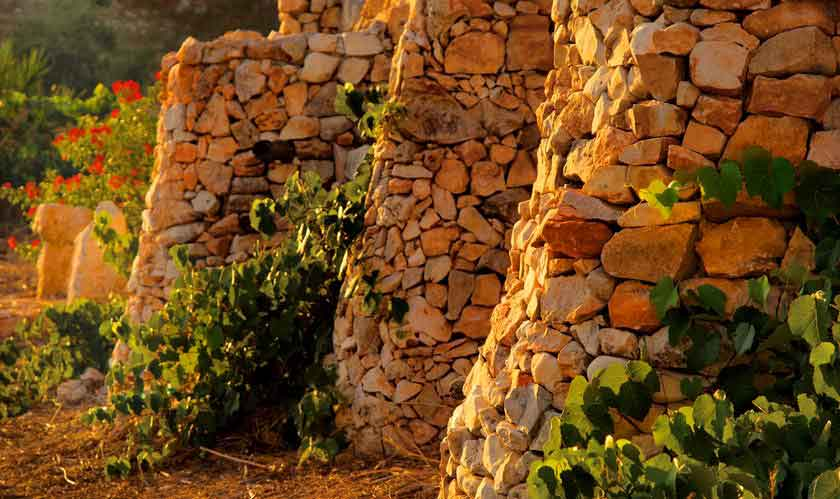 Les Chèvres dans le Vent | Galilée, Israël | Restaurant | Fromages de Chèvre Bio | Ferme Bio. Photo par Tal Gluck.